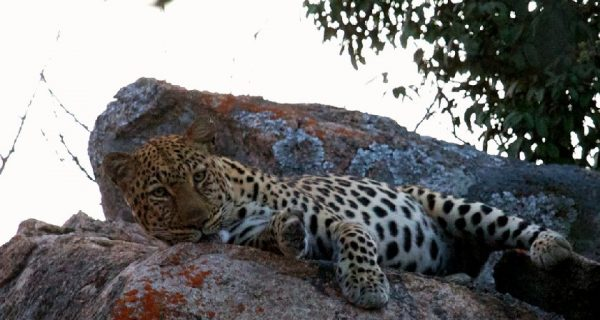 Matobo Hills, one of the highest concentrations of leopard in Africa and also one of the locations of the Inside Out Challenge PHOTO: WWW.BIGCAVEMATOPOS.COM
